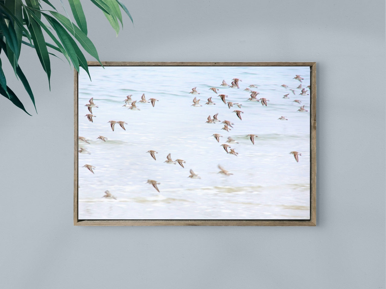 Framed canvas print of seagulls flying
