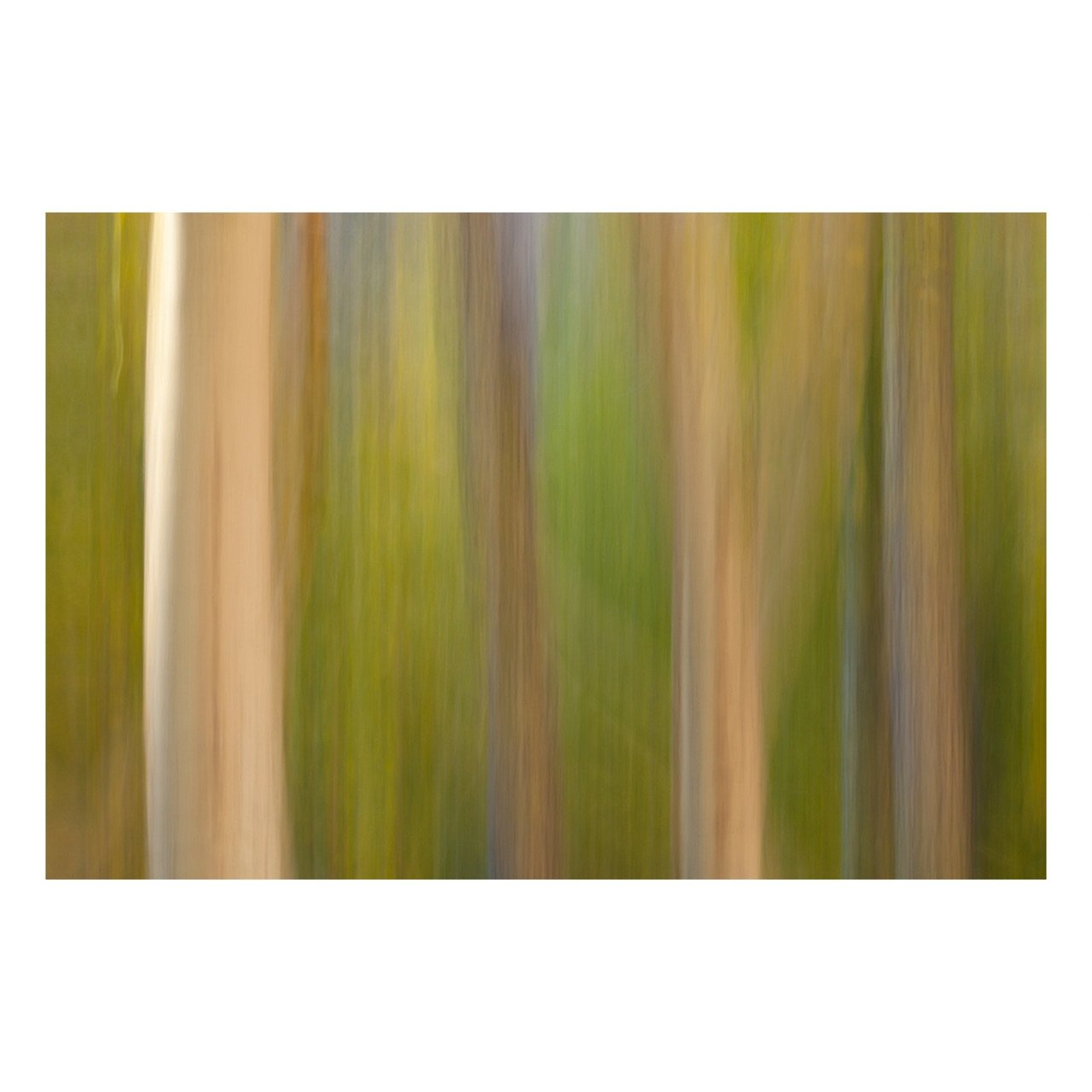 "Fine Art Prints - ""A Walk In The Woods"" 