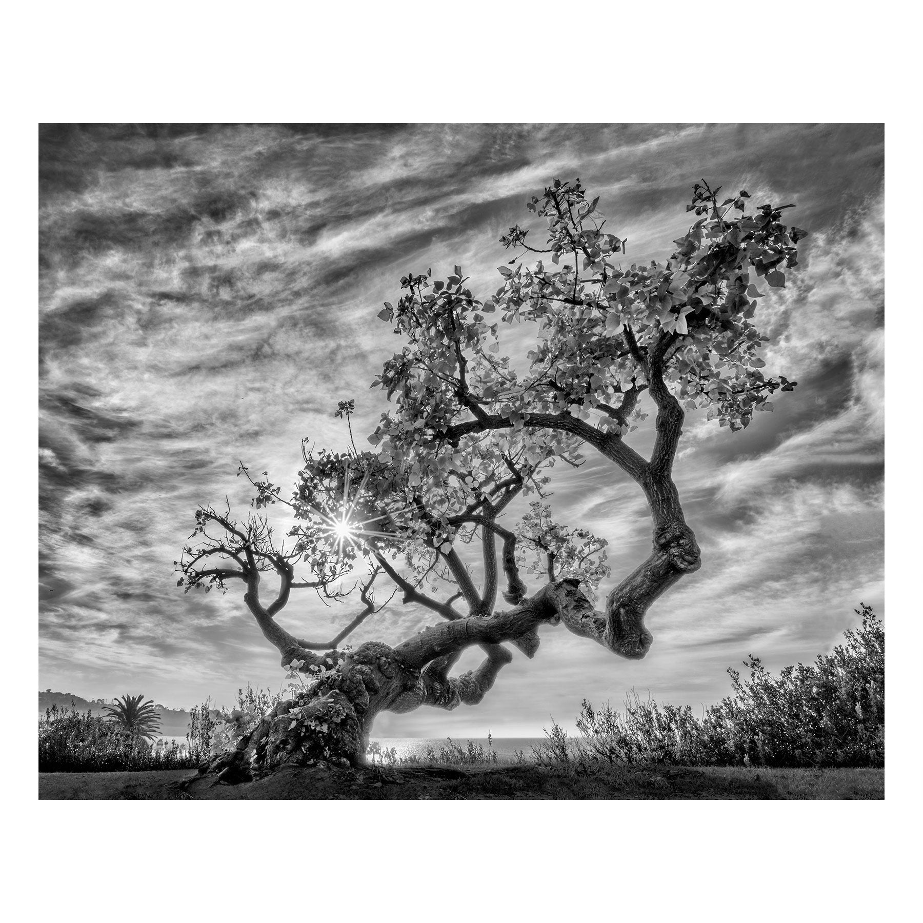 "Fine Art Prints - ""Coral Tree"" 