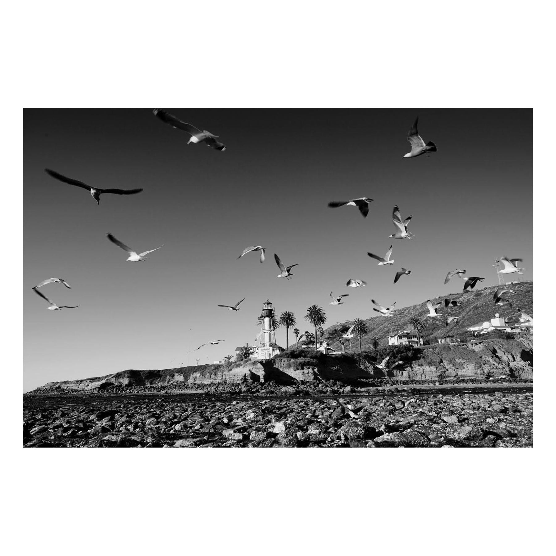 "Fine Art Prints - ""Lighthouse Birds"" 