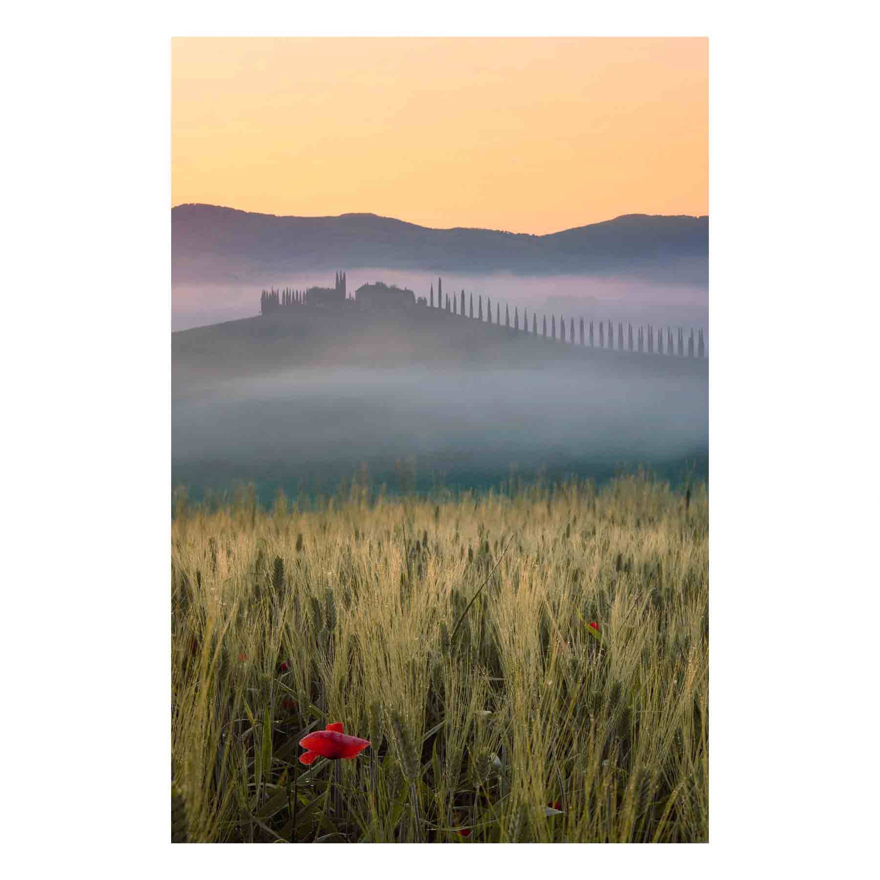 "Fine Art Prints - ""Misty Morning Tuscany"" 