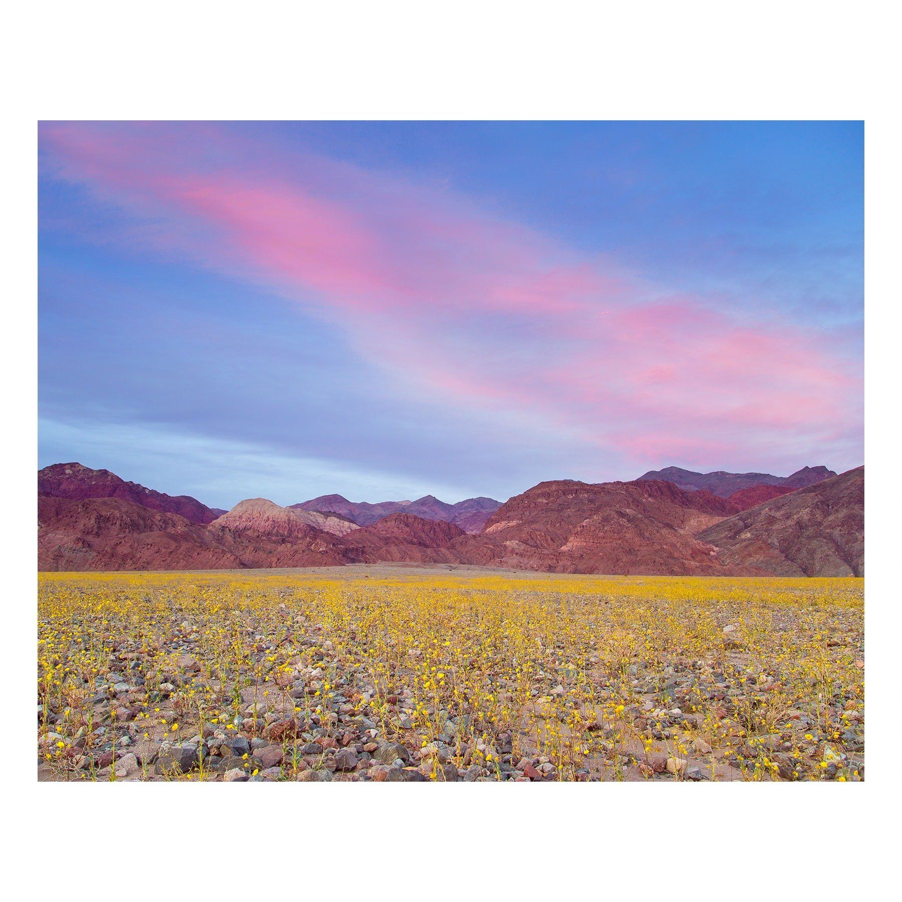 "Fine Art Prints - ""Superbloom 2016"" 