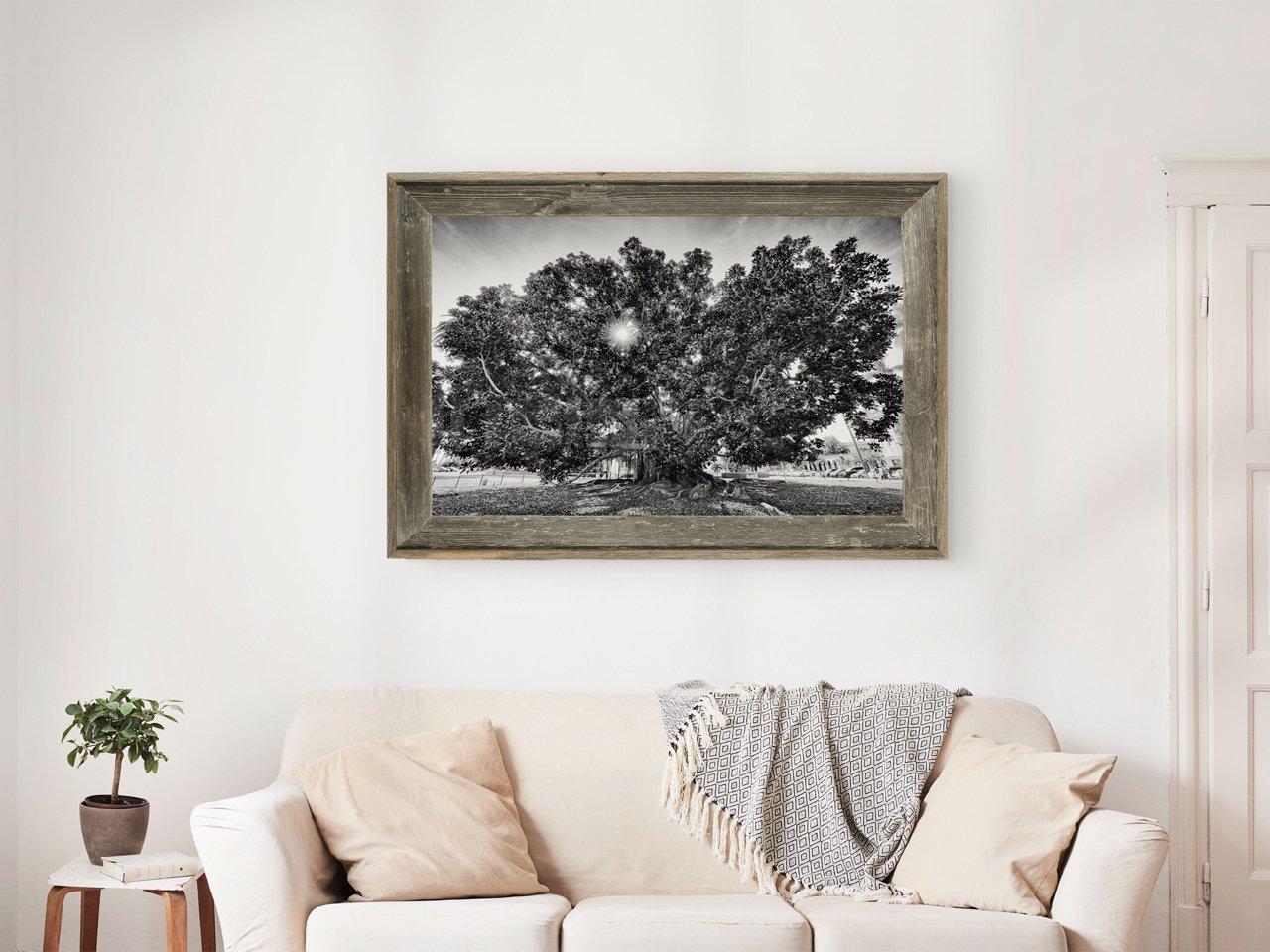 Fine Art Prints - The Big Tree
