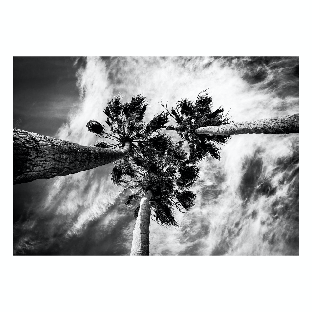 "Fine Art Prints - ""Three Palms"" 