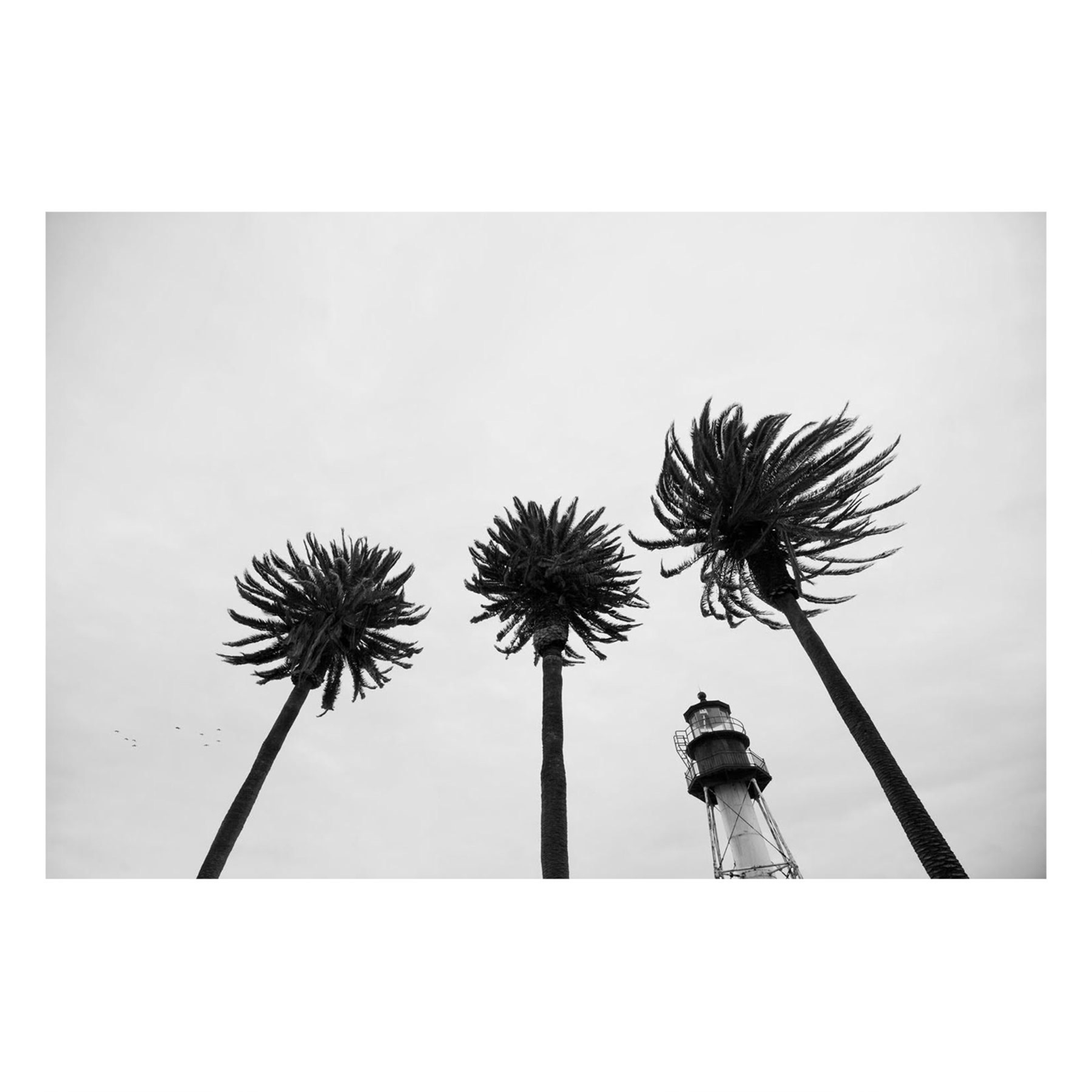 "Fine Art Prints - ""Windy"" 