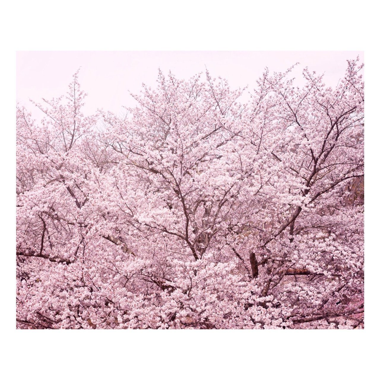 "Matted Prints - ""Pretty In Pink"" 