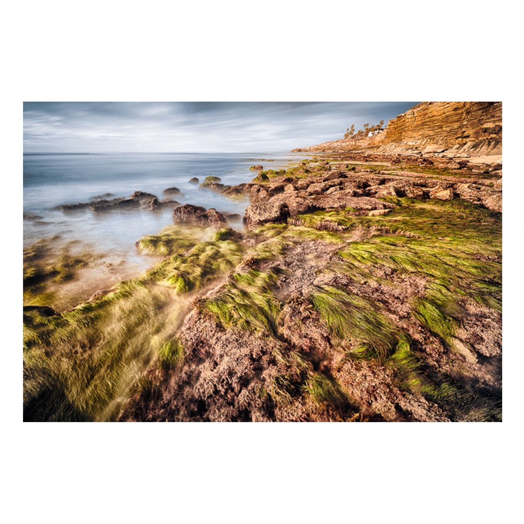 Matted Prints - Seagrass