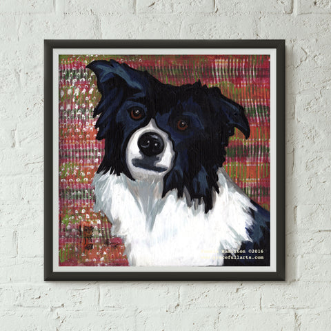 Ollie; Border Collie