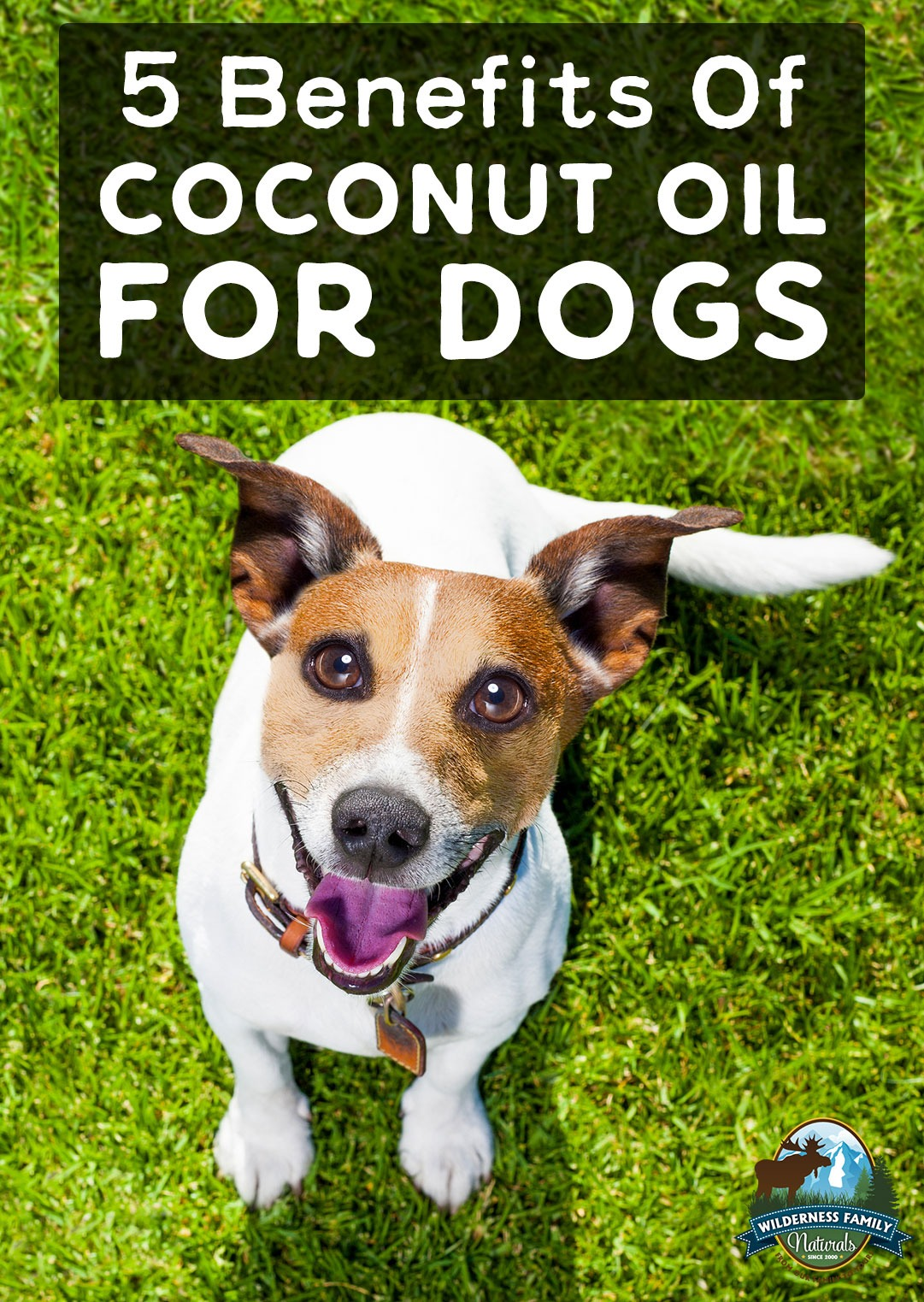 5 Benefits Of Coconut Oil For Dogs | Coconut oil may help maintain clean teeth, shiny fur, and overall good health for your beloved puppy. It's not a magic bullet, but it certainly can add to their overall well-being. Learn about the 5 benefits of coconut oil for dogs! | WildernessFamilyNaturals.com