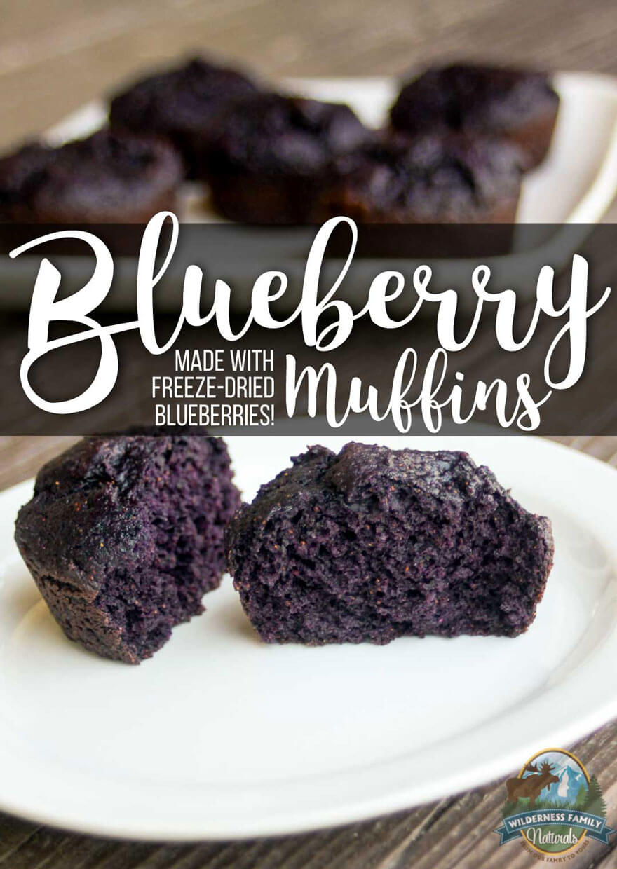 Top 10 Recipes With Freeze-Dried Berries | Very often, organic berries can be expensive or difficult to source. That's why we love freeze-dried berries! And you can use them in baked goods, to top granola or yogurt, or even to make jello and jam! Learn how here! | WildernessFamilyNaturals.com