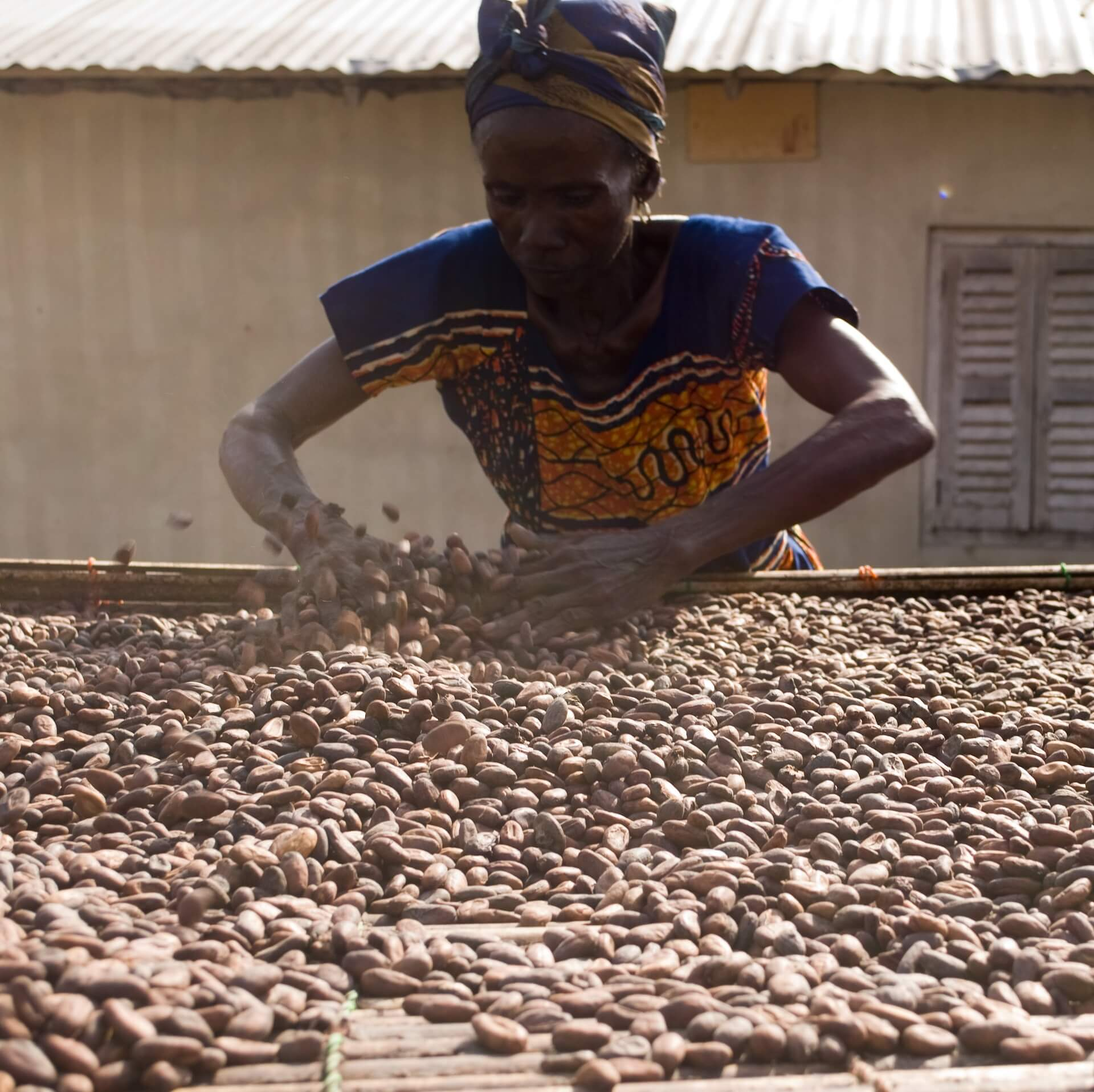 An African woman drying cacao beans out in the sun