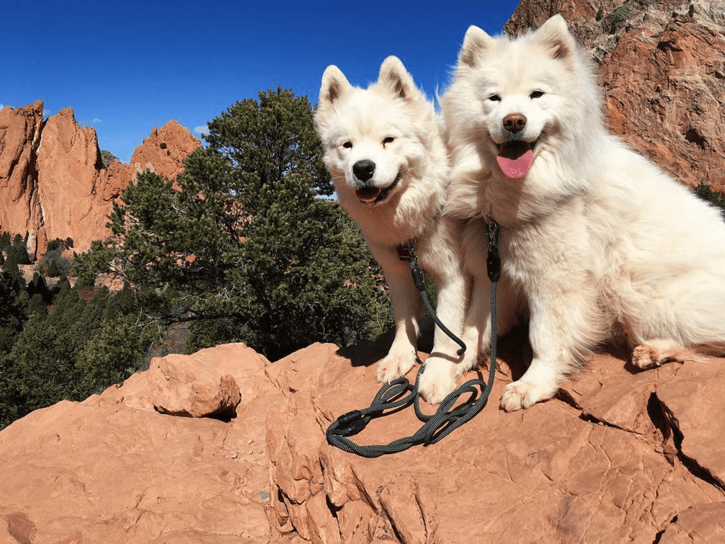 gallery-4-the-perfect-leash-atlas-pet-company