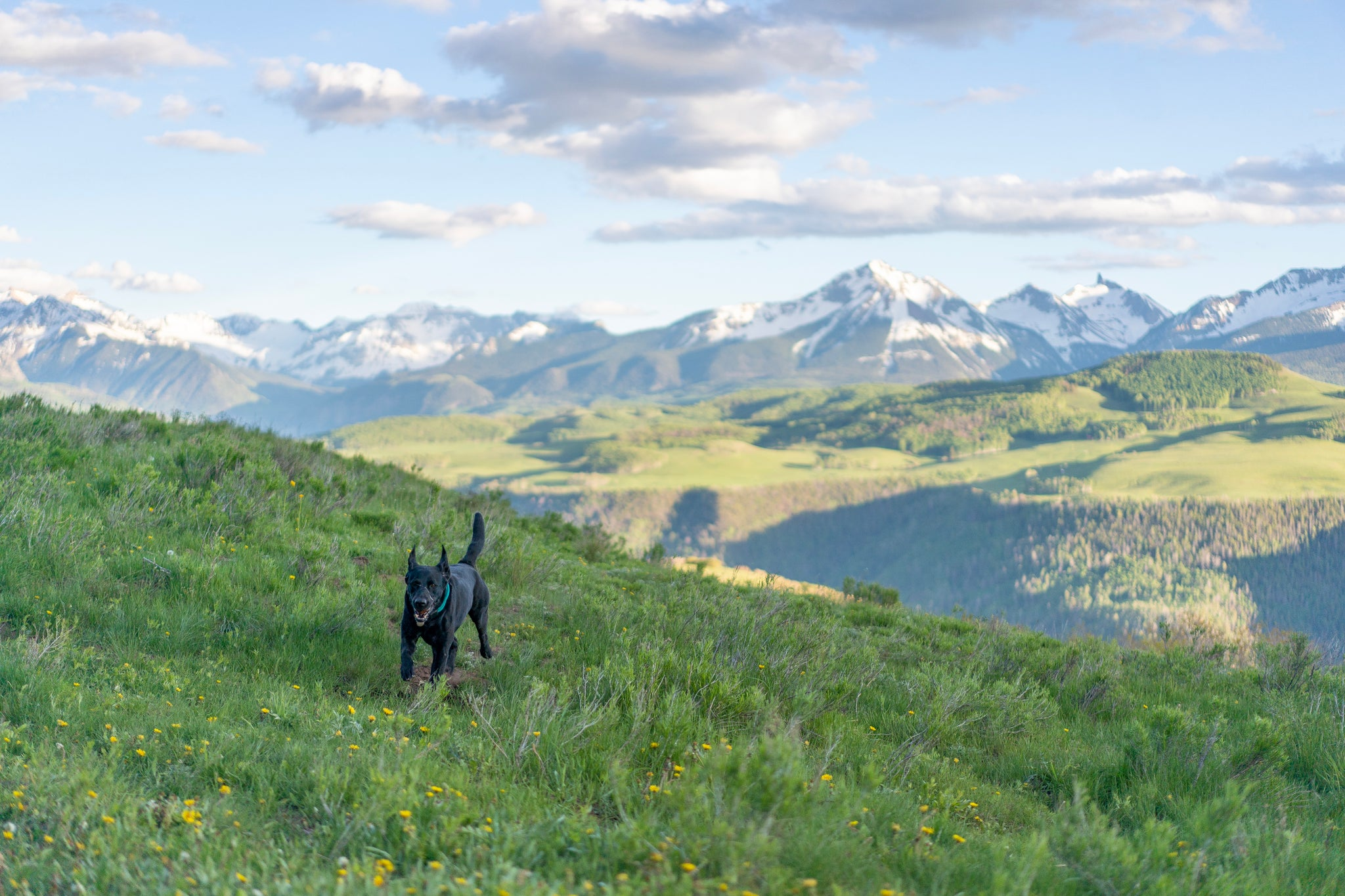 Dog running through a field with mountains in the backdrop - guide for no more lost dogs, how to keep dogs from escaping - Atlas Pet Company
