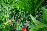 Red Elegance Vertical Garden UV Stabilised 1m X 1m