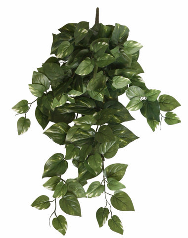 Philodendron Hanging Bush 73cm