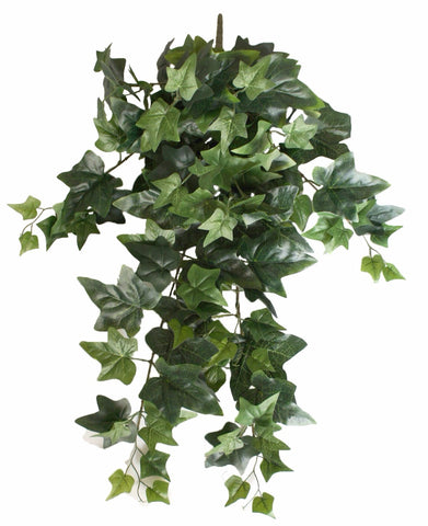Mixed Ivy Hanging Bush 70cm
