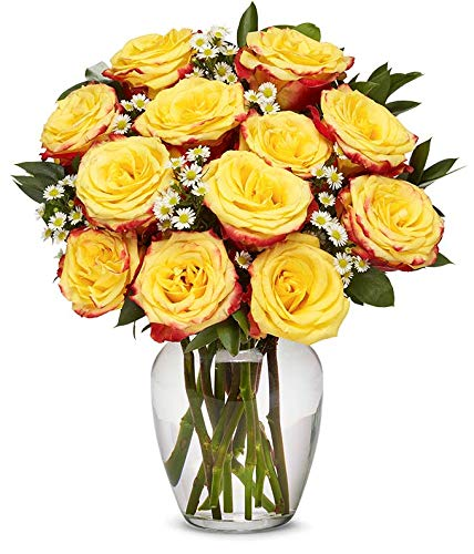 Flowers - One Dozen Festive Roses (Free Vase Included)