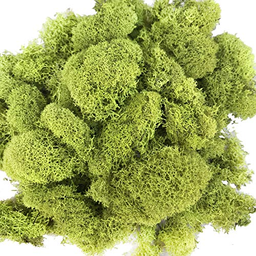 Reindeer Moss Preserved Floral Moss for Fairy Gardens, Terrariums, Any Craft or Floral Project or Wedding Other Arts(Chartreuse)