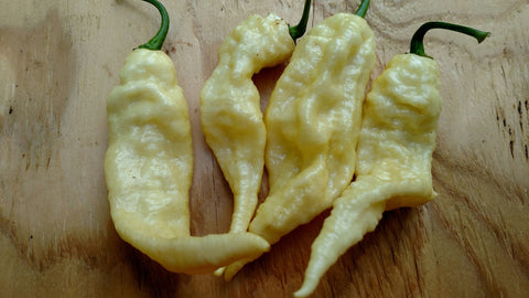 Bhut Jolokia White (Ghost Pepper)