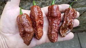 7 Pot Brown - Pepper Seeds - White Hot Peppers