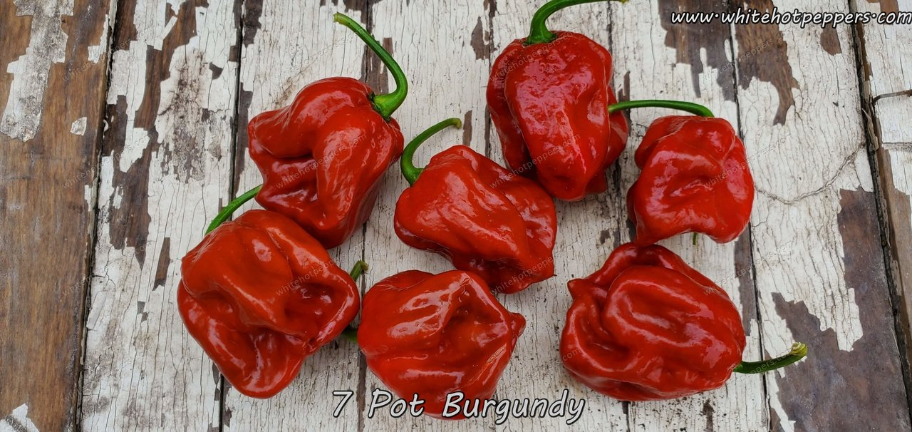 7 Pot Burgundy - Pepper Seeds - White Hot Peppers