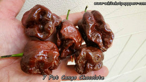 7 Pot Congo Chocolate - Pepper Seeds - White Hot Peppers