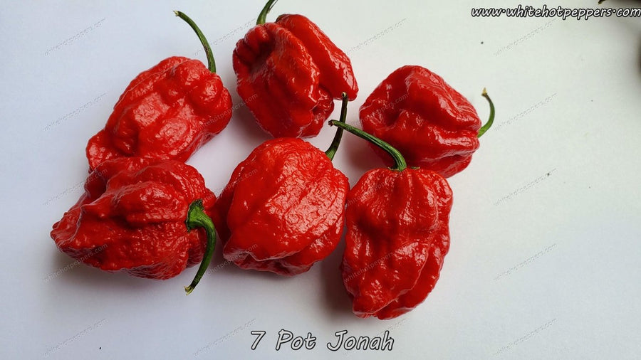 7 Pot Jonah - Pepper Seeds - White Hot Peppers