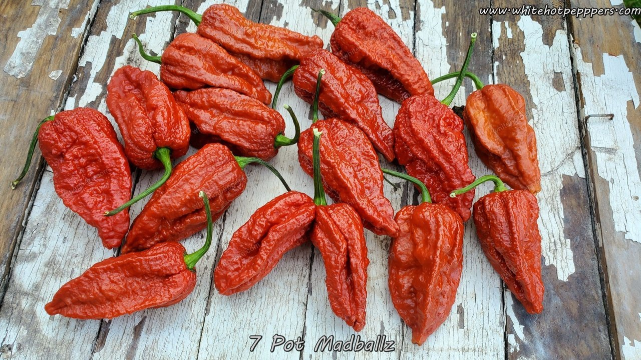 7 Pot Madballz - Pepper Seeds - White Hot Peppers