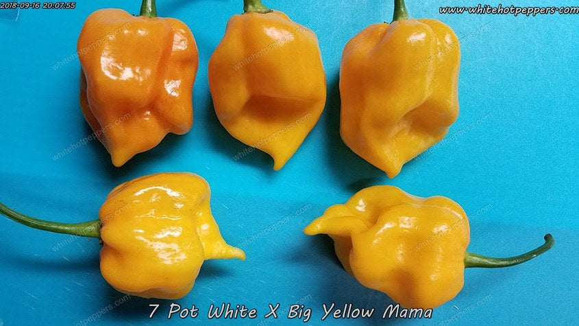 7 Pot White x Big Yellow Mama - Pepper Seeds - White Hot Peppers