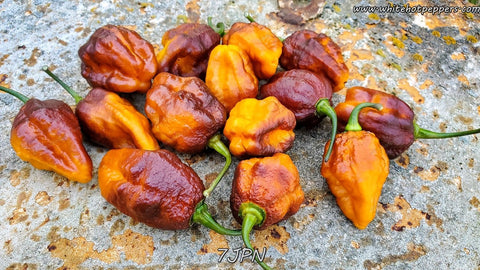 7JPN - Pepper Seeds - White Hot Peppers