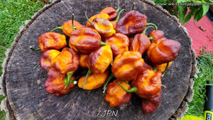 7JPN (Isolated) - Pepper Seeds - White Hot Peppers