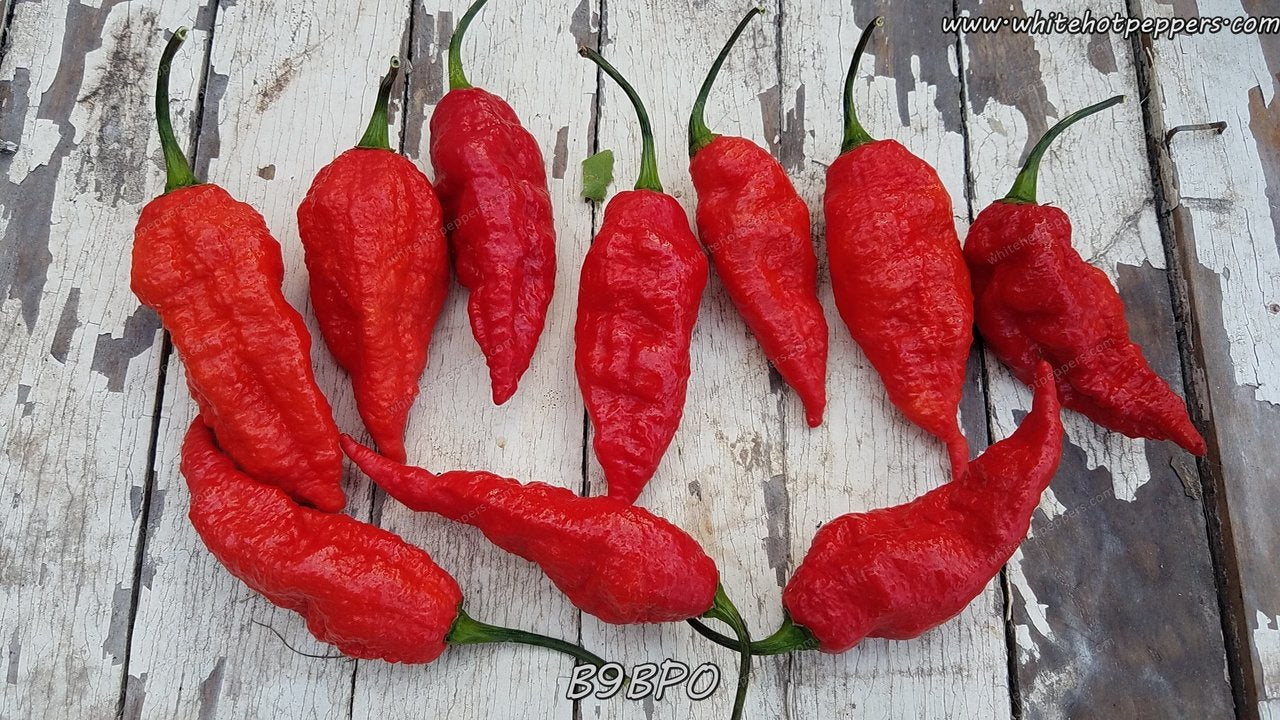 B9BPO - Pepper Seeds - White Hot Peppers