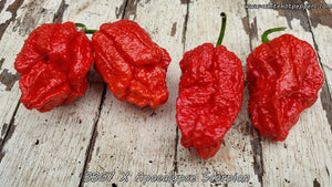 7 Pot Bubblegum (BBG7) x Apocalypse Scorpion (No Calyx) - Pepper Seeds - White Hot Peppers