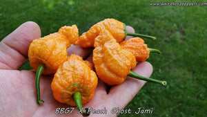 7 Pot Bubblegum (BBG7) x Peach Ghost Jami - Pepper Seeds - White Hot Peppers