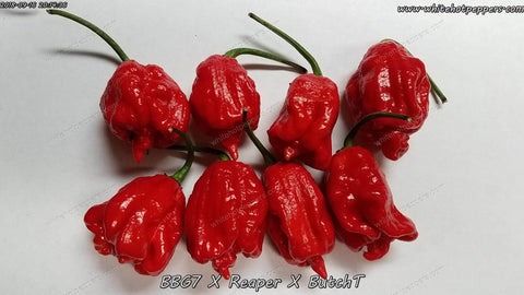 BBG7 x Reaper x ButchT - Pepper Seeds - White Hot Peppers