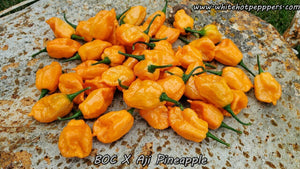 BOC x Aji Pineapple - Pepper Seeds - White Hot Peppers