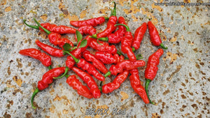 BRMX Red - Pepper Seeds - White Hot Peppers
