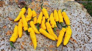 BRMX Yellow - Pepper Seeds - White Hot Peppers