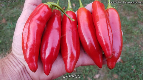 CAP 455 - Pepper Seeds - White Hot Peppers