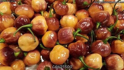 CGN 21500 - Pepper Seeds - White Hot Peppers