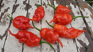 Jay's Peach Ghost Scorpion x Primo - Pepper Seeds - White Hot Peppers