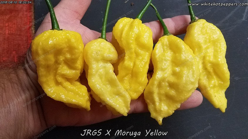 JRGS x Moruga (Yellow Pheno) - Pepper Seeds - White Hot Peppers
