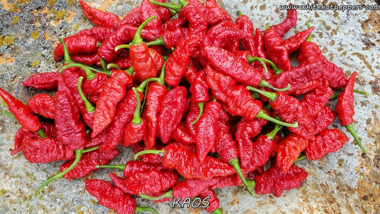 KAOS - Pepper Seeds - White Hot Peppers