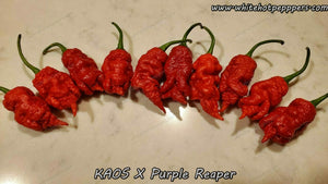 KAOS x Purple Reaper - Pepper Seeds - White Hot Peppers