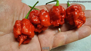 NAR - Pepper Seeds - White Hot Peppers