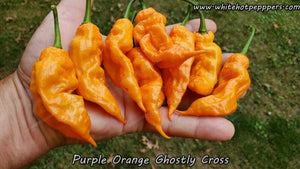 Purple-Orange Ghostly Cross - Pepper Seeds - White Hot Peppers