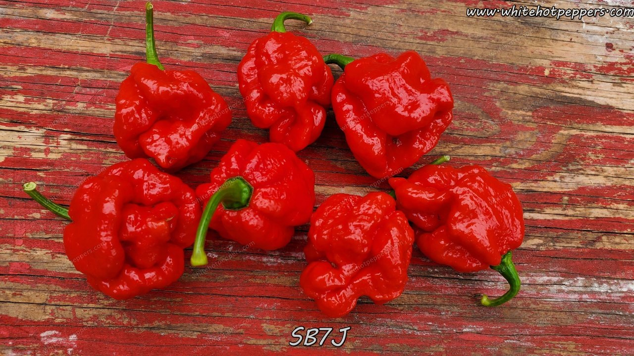 SB7J - Pepper Seeds - White Hot Peppers