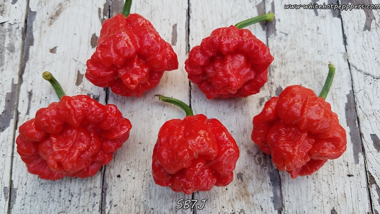SB7J JB - Pepper Seeds - White Hot Peppers