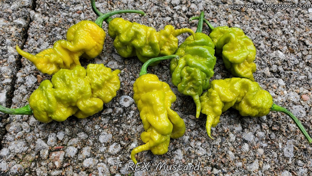 T-REX Mustard - Pepper Seeds - White Hot Peppers