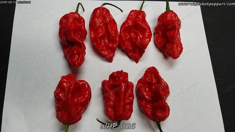 WHP 026 - Pepper Seeds - White Hot Peppers